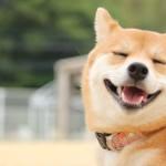 愛犬の白内障が進行してきたら手術するしかないのでしょうか?
